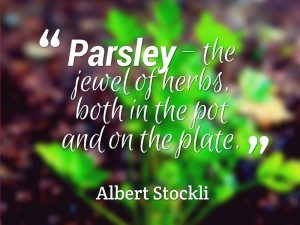 Parsley Jewel of Herbs