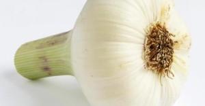 garlic heade