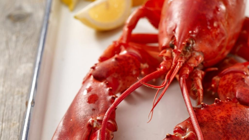 steamed-maine-lobster_1140x642_acf_cropped-2